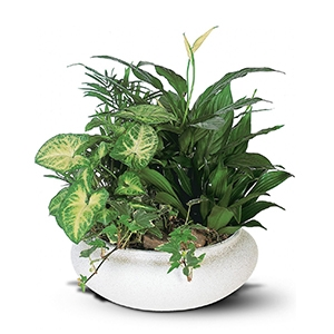 Medium Dish Garden- Temporarily Out- call for available plants